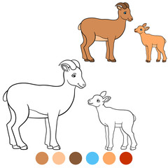 Color me: urial. Mother urial with her little cute baby.
