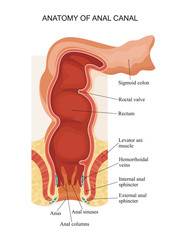Anatomy of anal canal.