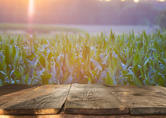 Empty wooden table over wheat field background