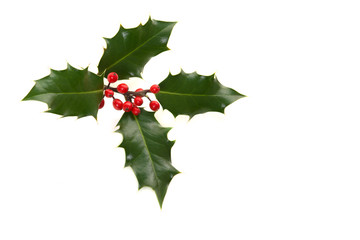 Holly ilex, christmas decoration, on a white background