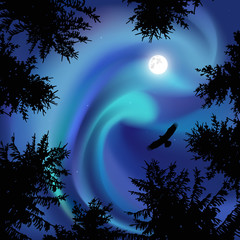 Silhouette of coniferous trees on the background of blue sky.  Eagle in the sky. Night. Northern lights.   View from below.