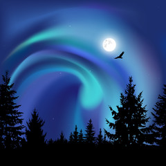 Silhouette of coniferous trees on the background of colorful sky.  Flying eagle. Night. Moonlight.  Blue northern lights.