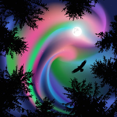 Silhouette of coniferous trees on the background of colorful sky. Flying eagle in the sky. Northern lights.   View from below.