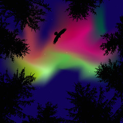 Silhouette of coniferous trees on the background of colorful sky.  Eagle in the sky.  Pink and green northern lights.   View from below.