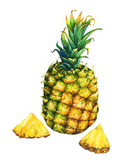 Ripe pineapple with green leaves. Watercolor illustration on a white background.