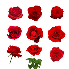 colection of beautiful red rose flower isolated on white background