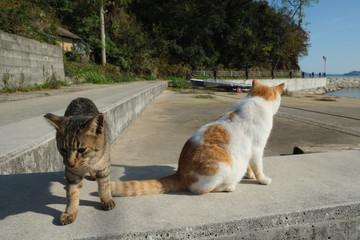 島の猫 香川県 男木島漁港にて