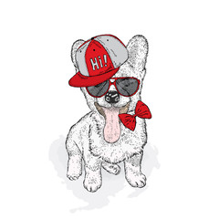 Cute puppy wearing a cap and sunglasses. Vector illustration. Welsh-Corgi-Pembroke.