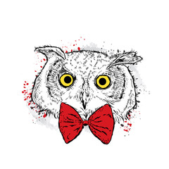 Door stickers Hand drawn Sketch of animals Owl in the bow tie. Vector illustration.