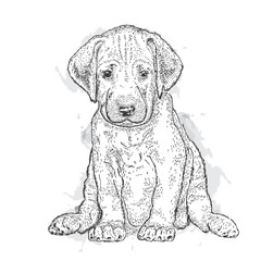 Cute puppy. Illustration for a card or print on clothes. Poster. Vector drawing