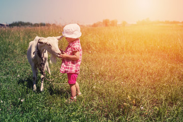 Little girl child with white goat outdoor. Summer meadow, childhood in nature