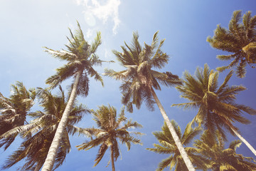 Coconut Palm trees on blue sky background. Tropical paradise