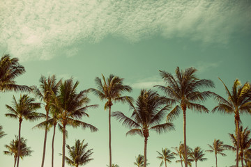 Coconut Palm trees in tropic paradise beach. Summer traveling background, freedom, tropical vacation