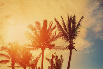 Palm trees on evening sky and sun background