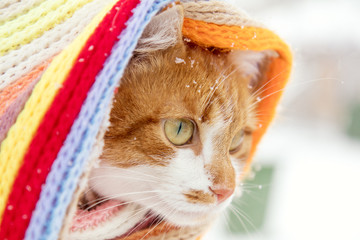 Red and white kitty cat in checkered scarf covered with snowflakes