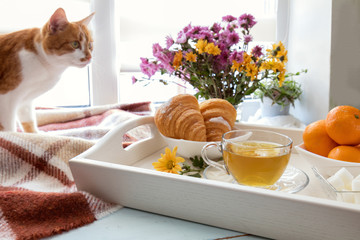 Cup of tea, croissant, chrysanthemum flowers and tangerines in tray and red cat on the windowsill. Cozy home concept. Coloring and processing photo