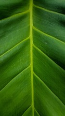 Green leaf background and texture