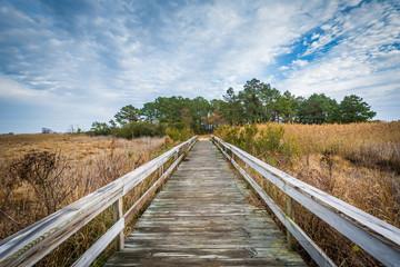 Boardwalk trail at Chincoteague National Wildlife Refuge, at Chi