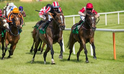 Race horses sprinting around the turn towards  the finish line