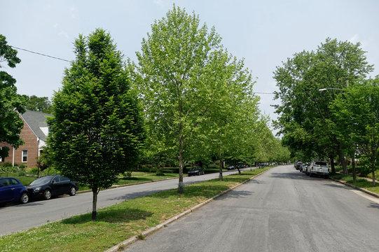 Residential neighborhood homes, median strip, trees, and street. Focus on street.