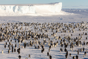 Where is Waldo (the Emperor penguin)?
