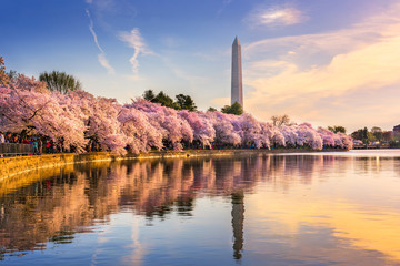 Fotomurales - Washington DC in Spring