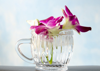 Thailand orchid in glass on blue background.