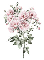 watercolor flowers. floral illustration in Pastel colors, pink rose. branch of flowers isolated on white background. Leaf and buds. Cute composition for wedding, greeting card. bouquet