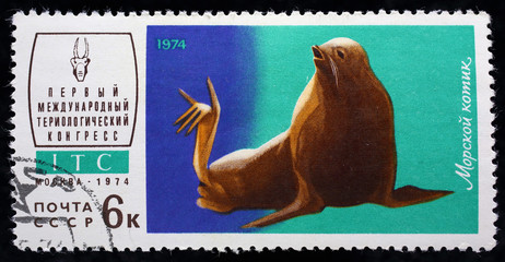 "USSR - CIRCA 1974. Postage stamp of the series ""First International Congress mammological"" with a picture of Fur seal, circa 1974"