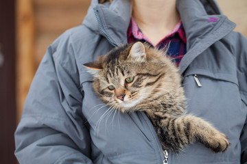 Cute cat sitting in a jacket. Animal portrait close up