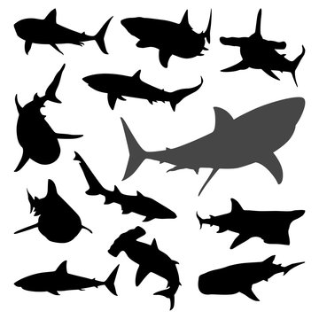 Various Shark Movement Silhouette Collection