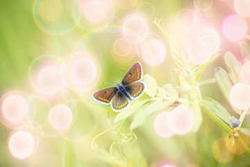 Beautiful brown butterfly on spring flower - beautiful nature