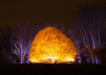Enchated Gardens glowing tree
