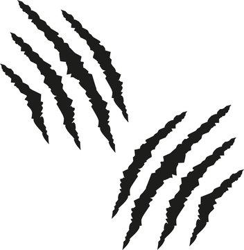 Claw scratch marks