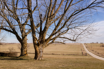 Two Trees Alongside a Rural Gravel Road