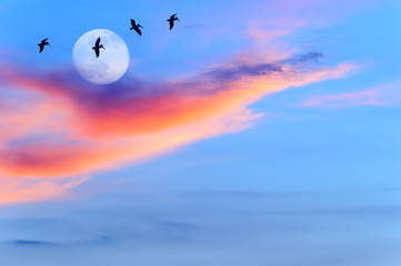 Wall Mural -  Birds Silhouettes Sunset Moon