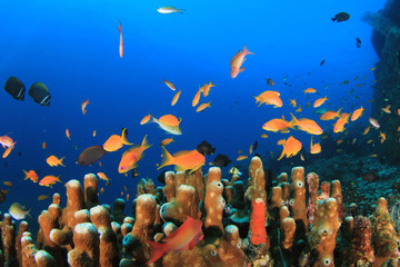 Fish,coral reef,scuba diving underwater