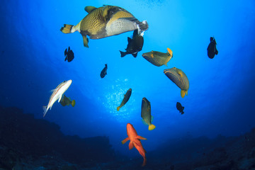 Fish in ocean on underwater coral reef