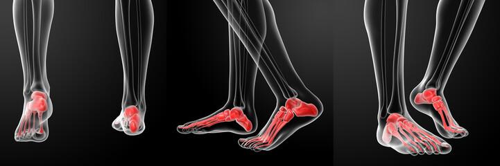 3D rendering of the human Skeletal  Feet
