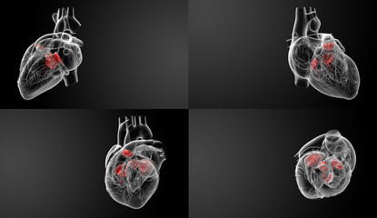 3D rendering of the Heart valve