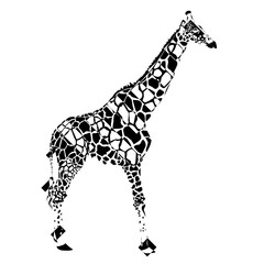 The giraffe in negative rectangles on white background