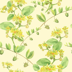 Jojoba - flowers and fruits. Branches. Seamless background. Watercolor painting. Wallpaper.