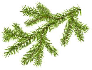 Green fir branch with short needles