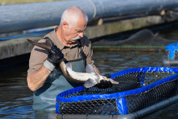 man working at a fish farm