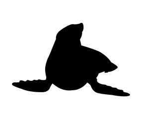 Sea Lion Silhouette on White Background