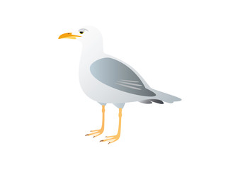 Gull on a white background. Illustration seagull. Lone seagull standing