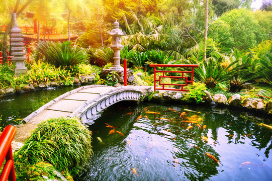 Japanese garden with swimming koi fishes in pond