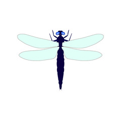 Dragonfly vector illustration isolated on a white background