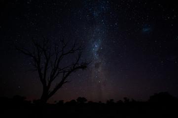 Milky way and dead tree silouhette in the Kalahari