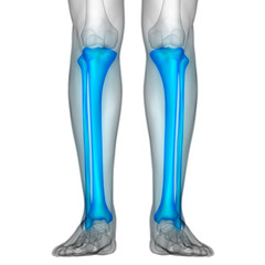 Human Body Bone Joint Pains (Tibia and Fibula joints)